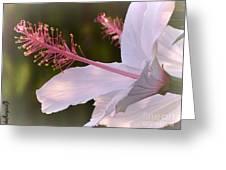 Hibiscus Bloom Pastel Greeting Card