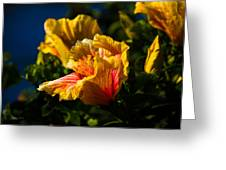 Hibiscus Blooms Greeting Card