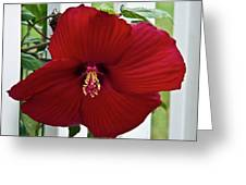 Hibiscus By Picket Fence Greeting Card