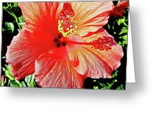 Hibiscus - Dew Covered - Beauty Greeting Card
