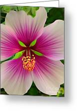 Hibiscus Face Greeting Card