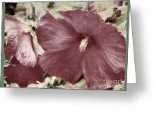 Hibiscus Floral Series  Greeting Card