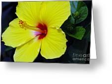 Hibiscus Flower 1 Greeting Card