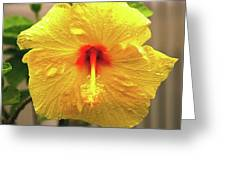 Hibiscus Flower After The Rain Greeting Card
