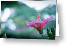 Hibiscus Flower In A Garden Greeting Card