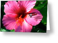 Hibiscus Fly-by Greeting Card