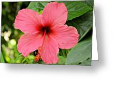 Hibiscus Front Greeting Card