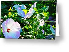 Hibiscus Garden Greeting Card