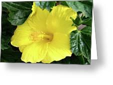Hibiscus Heaven Greeting Card