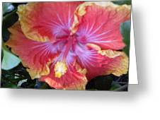 Hibiscus In Living Color Greeting Card