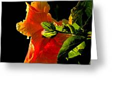 Hibiscus In The Light Greeting Card