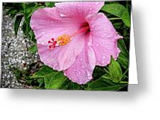Hibiscus On A Rainy Day Greeting Card