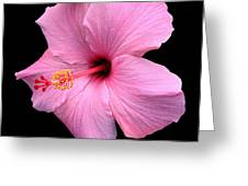 Hibiscus On Black Greeting Card