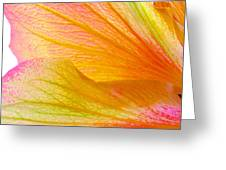 Hibiscus Petals Greeting Card