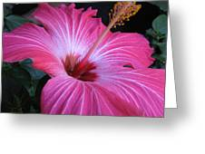 Hibiscus Photograph Greeting Card