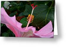 Hibiscus Pink Flower Greeting Card