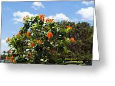 Hibiscus Rosasinensis With Fruit Greeting Card