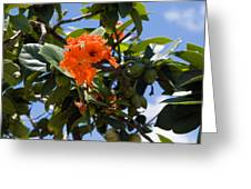 Hibiscus Rosasinensis With Fruit On The Indian River Greeting Card