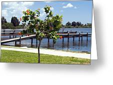 Hibiscus Rosasinensis With Fruit On The Indian River In Florida Greeting Card