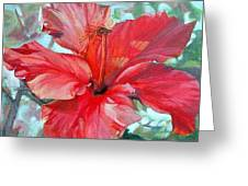 Hibiscus Rouge Greeting Card