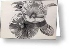 Hibiscus Sketch Greeting Card