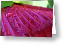 Hibiscus Square Greeting Card