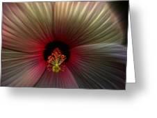 Hibiscus Supreme Greeting Card