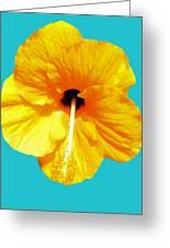 Hibiscus Test 4 Greeting Card