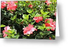 Hibiscus Tree Greeting Card