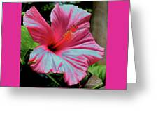 Hibiscus With A Solarize Effect Greeting Card