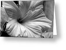 Hibiscus With An Infrared Effect Greeting Card