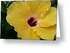 Hibiscus Yellow Greeting Card