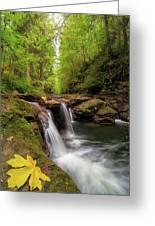 Hidden Falls At Rock Creek Greeting Card