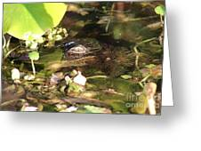 Hidden Gator Greeting Card