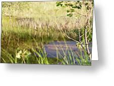 Hidden Grass Greeting Card