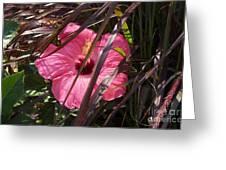 Hidden Hibiscus  Greeting Card