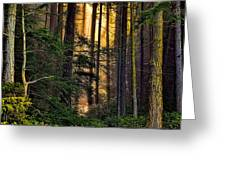 Hidden In The Forest Greeting Card