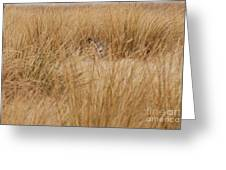 Hidden Mule Deer Greeting Card