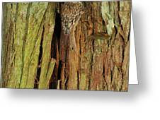 Hidden On The Tree Greeting Card