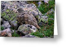 Hidden Ptarmigan Greeting Card
