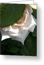 Hidden Rose Greeting Card