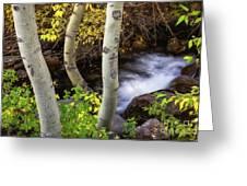 Hidden Stream Greeting Card