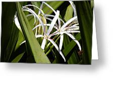 Hidden Swamp Lily Greeting Card