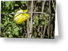 Hidden Yellow Tulip 02 Greeting Card