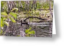 Hide And Seek Ducks Greeting Card