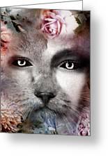 Hiding Catlady Greeting Card