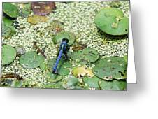 Hiding Dragonfly Greeting Card