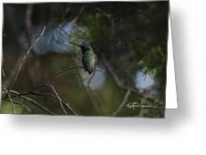 Hiding Hummer Greeting Card
