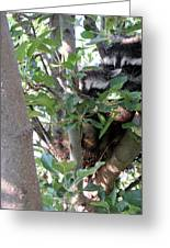 Hiding In A Tree Greeting Card