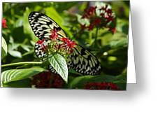 Hiding In The Flowers Greeting Card